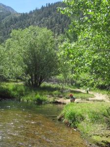6-14-14 Hike to waterfall (2)