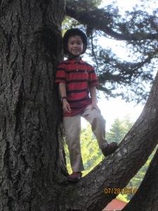 We found a monkey on a tree!
