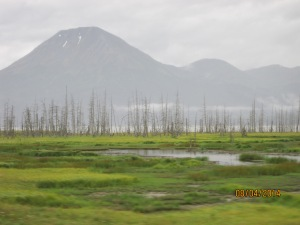 Along the Alaska Coast Hwy, we passed by the Toothpick Forest. This area used to be covered by tall trees.