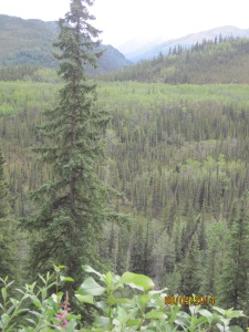 8-5 Alaska 132